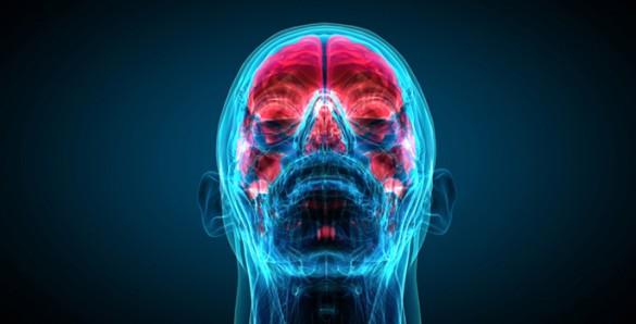 brain-mind-585x298