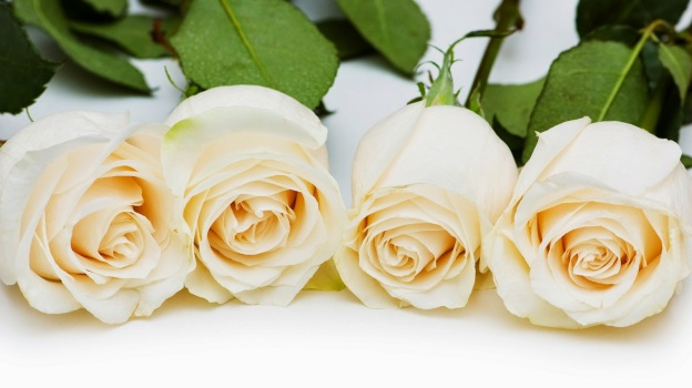Ravishing-four-white-rose-sticks