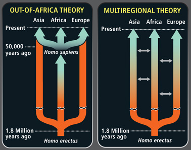 out of africa or multiregional theory For many years, scientists have wondered about the evolution of mankind the two theories that scientists have come up with over the years to explain the theory of evolution were the multiregional theory and out of africa theory.