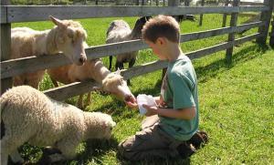 feeding lambs of God