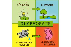 2014-08-08-epa-considers-glyphosate-ban-cycle
