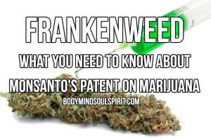 gmo-monsanto-frankenweed-marijuana